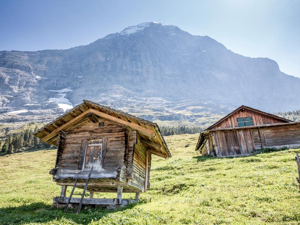 Zwei Holzhütten die dem Aufbewahren von Käse dienen, stehen auf einer grünen Alm vor der Eiger Nordwand in der Nähe des Bodmi Wanderhotel in der Schweiz