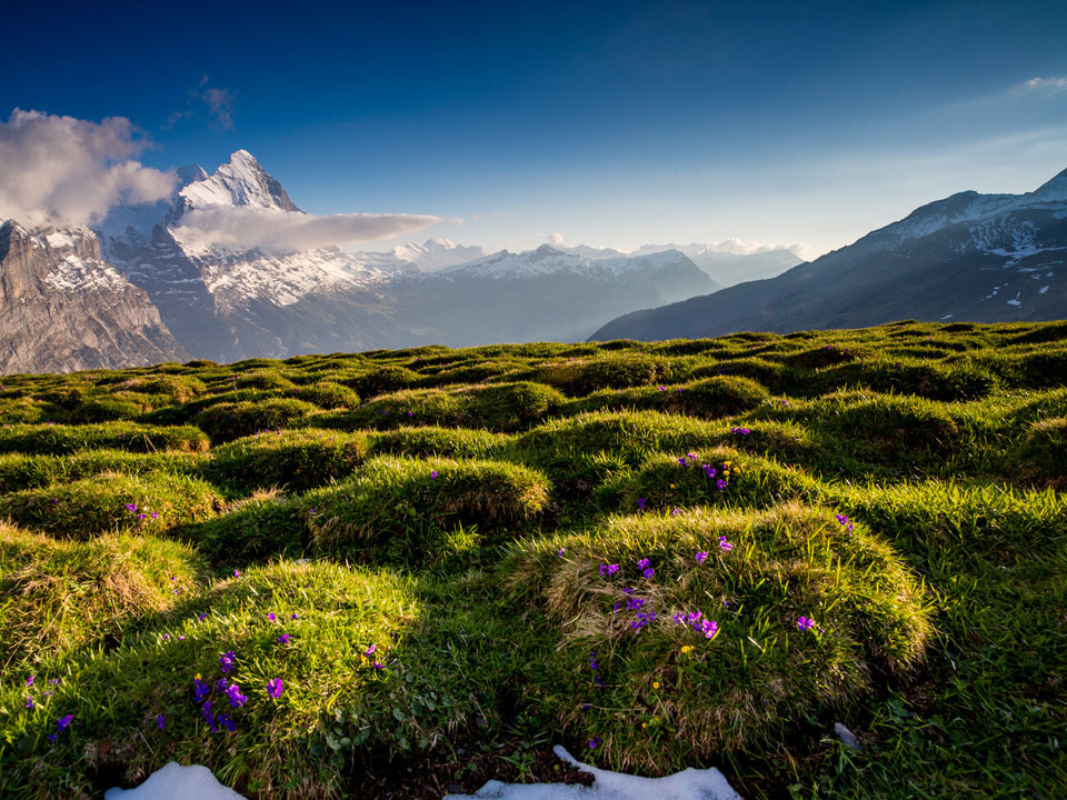 Ein grünes Feld vor dem Panorama der Berge in der Nähe des Bodmi Berghotels in der Schweiz