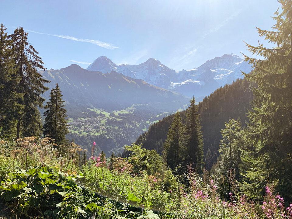 Ausblick von einem dicht bewachsenen Wald auf einen Berg in der Nähe vom Bodmi Wanderhotel in Grindelwald