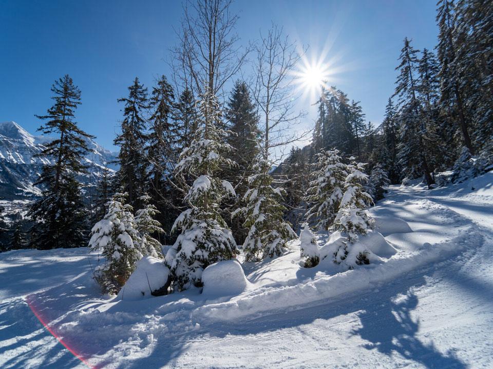 Verschneite Tannen und ein schneebedeckter Weg im Skigebiet Grindelwald, ideal zum Schlittenfahren in der Schweiz